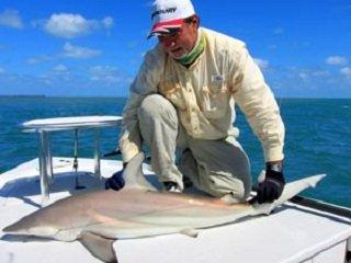 file_166341_0_shark