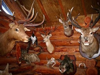 Taxidermy Tips: Salting Dos and Dont's