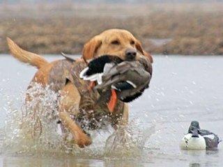 Dog with Bird