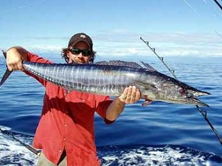 Fish Files: Wahoo