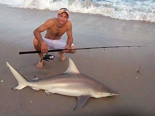 How to catch sharks from shore liveoutdoors for Saltwater shore fishing tips