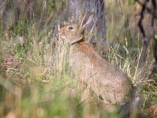 file_167337_0_Wild_rabbit_in_grass