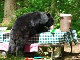 file_167349_0_bears