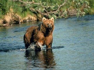 file_167481_0_Brown_bear_in_creek