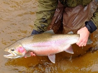 file_167557_0_steelhead