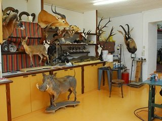 file_167592_0_taxidermist