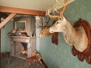 file_167773_0_taxidermy
