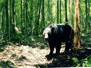 file_168097_0_bear_in_woods