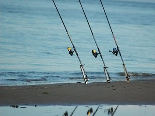 Casting or spinning reel for sharks from shore liveoutdoors for Shark fishing from shore
