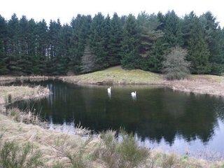 pike pond