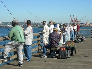 Gear for beginner pier fishermen liveoutdoors for Miami fishing supply
