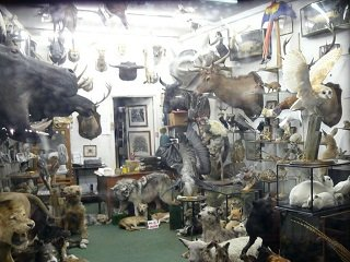 Tips for Finding a Top Taxidermist, Part Two