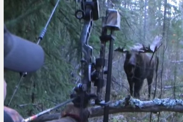 bowhunt-moose