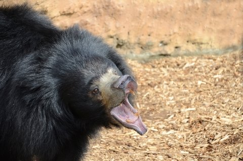 Washington Man Survives Two Bear Attacks in Four Years
