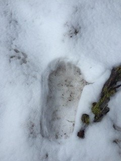 bigfoot-2