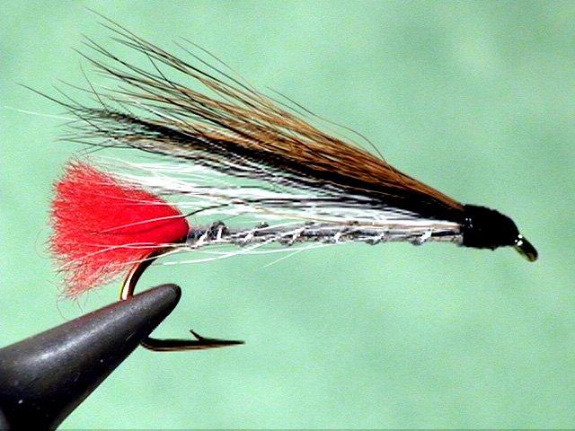 fly-black-nose