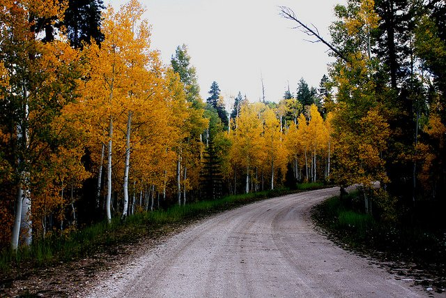 Tips For Traversing Forest Service Roads