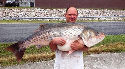 striped_bass_2015_dillman