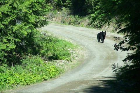 Hunting Black Bear Thrill of a Lifetime