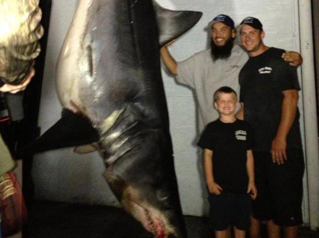 Gigantic Mako Shark Product of Polluted SoCal Waters