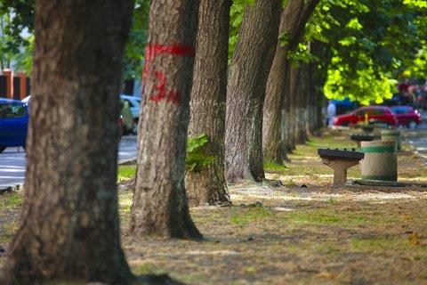 Living Near Trees Improves Health, Happiness, Study Says