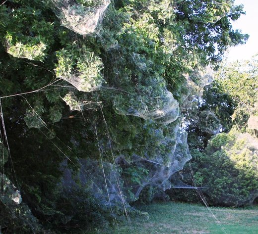 Massive Spider Web Shocks Texas Town