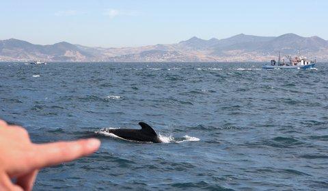 Pilot Whales Crash New Jersey Fishing Tourney