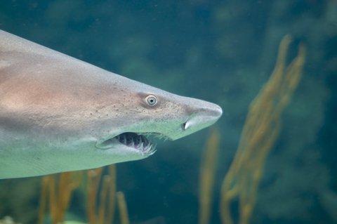 Dozens of Beachgoers Try to Save 14-foot Great White Shark