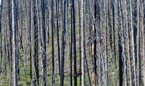 trees burned