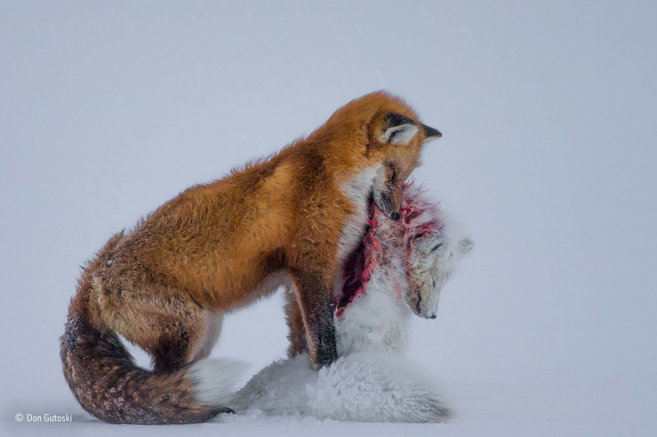 Natural History Museum Awards Best Wildlife Photos of the Year