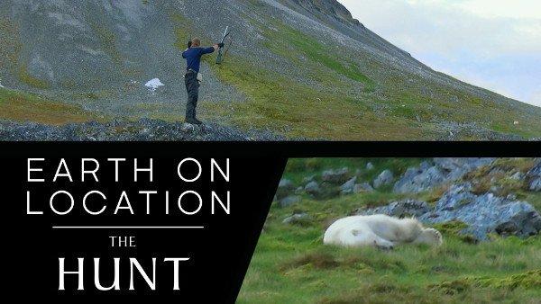 bbc polar bear