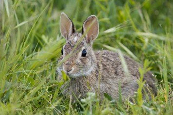 Tips for Hunting Fall Rabbit
