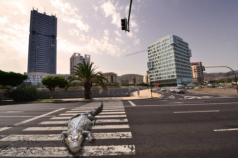 gator on street