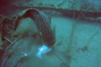 Watch A Goliath Grouper Snatch This Spear Fisherman's Catch