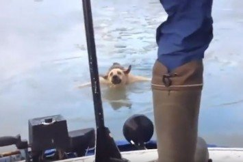 Russians Save Dog Clinging to Floating Ice