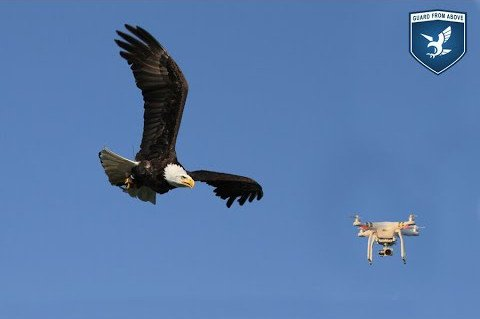 drone-eagle