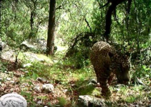 jaguar-tucson
