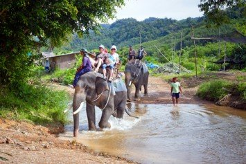 Scottish Tourist Gored to Death by Elephant in Thailand