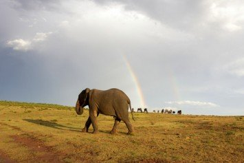 Zimbabwe Using Elephant Hunts to Fund New Stadium