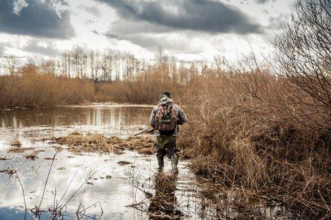 hunter swamp