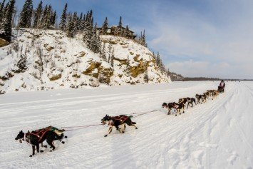 Black Out Drunk Snowmobiler Plows Iditarod Teams, Killing Sled Dog