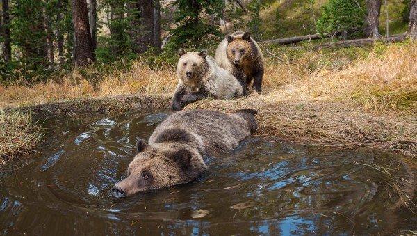 bear tub