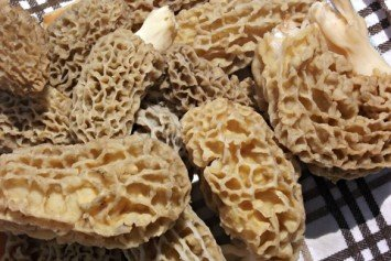 4 Creative Ways to Prepare Morel Mushrooms