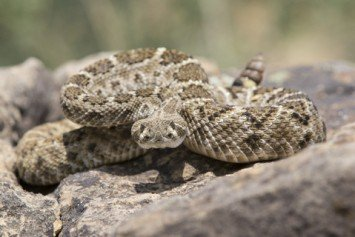 3 States Great for Hunting Snakes