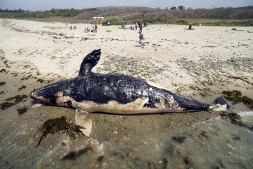 Crews Remove Whale Carcass From Popular SoCal Beach