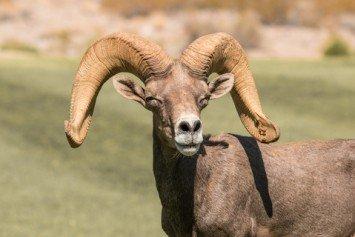 Win a Dream Hunting Tag in Nevada