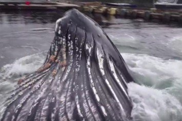 Watch a Whale Surface Right in the Marina