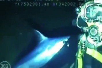 Swordfish Attacks Commercial Scuba Diver