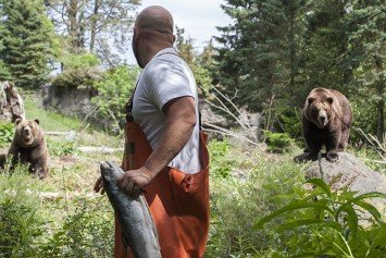 Seattle's Famed Fish Tossers Launch Salmon to Bears