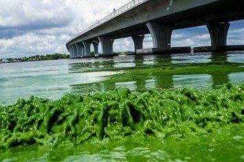 Florida Algae Bloom Sparks Political Finger Pointing